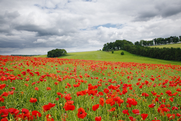 Landscape Photograph Remembering of poppies by Nick Oakley Photography