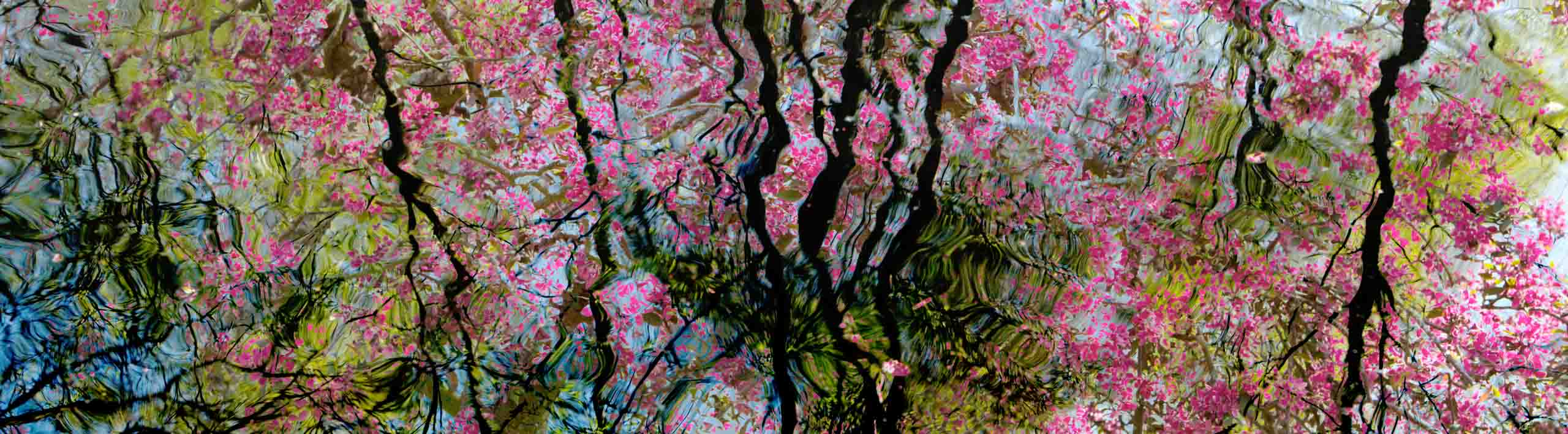 Multiple Exposure Photograph Blossom 1 by Nick Oakley Photography