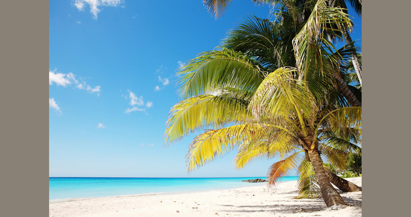 Yellow and green leaved palms lean over white sand towards clear blue sea and sky