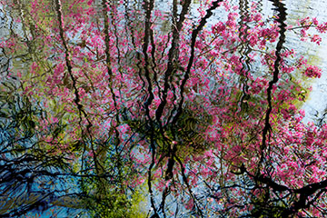 Refelcted trees and blossom image from the Multiple Exposure gallery by Nick Oakley Photography